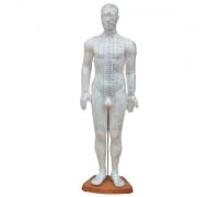 Модель для акупунктуры - Мужчина (60см)